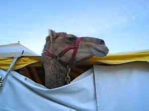 camel tent
