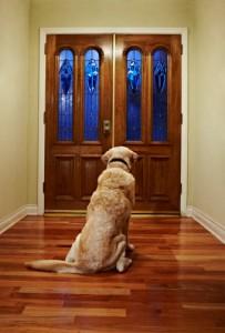 optimistic dog